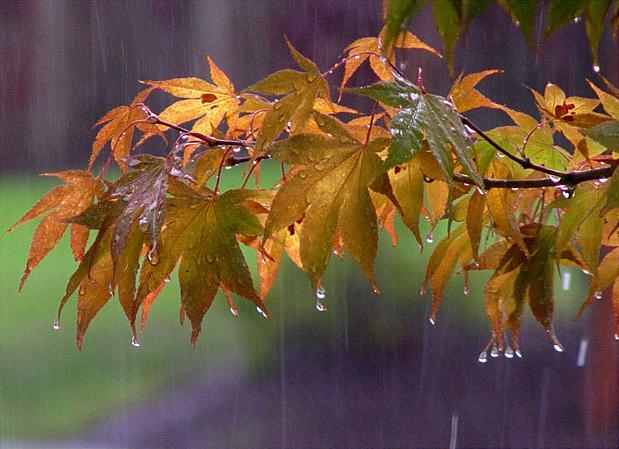 Autumn%20Rain
